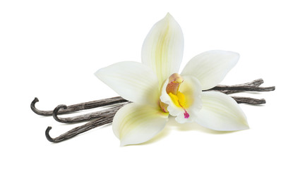 White vanilla flower pod isolated