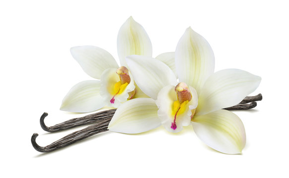 Double vanilla flower pods isolated on white