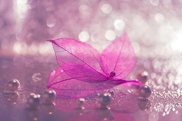 Transparent sheets.Skeleton leaf. An artistic image .Selective soft focus