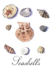 Watercolor set of seashells isolated on white