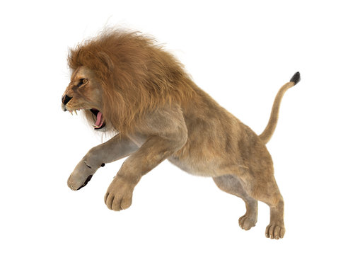 3D Rendering Male Lion on White