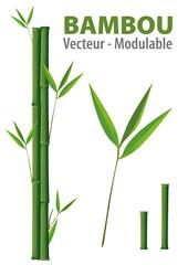 BAMBOU - Vecteur modulable