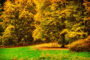 Autumn sunny park with orange trees and meadow , natural seasonal background