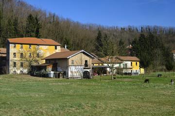 Olona valley (Italy), farm with donkeys