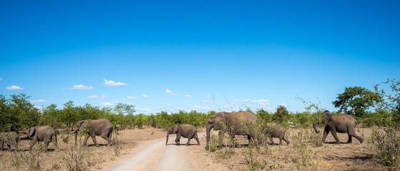 Elefanten-Familie queren Piste im Krüger Nationalpark