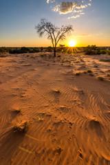 Sonnenuntergangs-Stimmung in der Kalahari mit Tierspuren