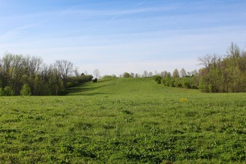 The green grass field landscape .