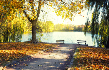 Foto op Aluminium Zwavel geel Lake in the park with benches