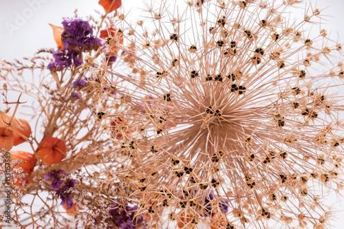 Strohblumen Getrocknete Blumen Als Hintergrund