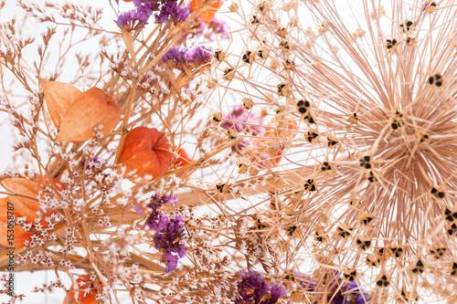 Strohblumen Getrocknete Blumen Als Hintergrund Stockfotos Und Lizenzfreie Bilder Auf Fotolia Bild 153057989