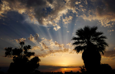 Palm trees are silhouetted during sunset at the seafront in Marseille