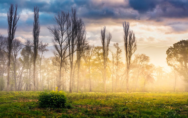trees on meadow in mountains at foggy sunrise