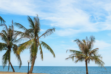 Coconut palm tree and sky clouds on tropical beach
