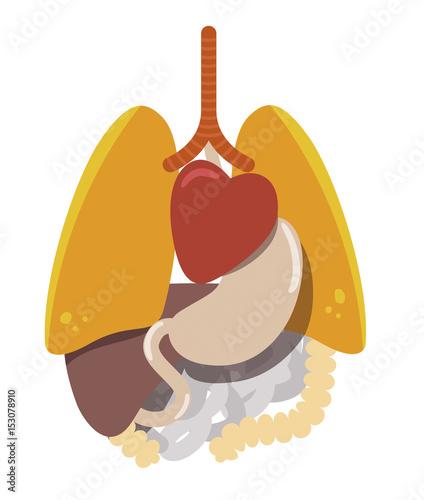 Anatomia del cuerpo humano, organos internos\