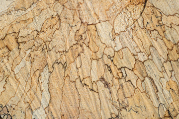 Texture, tree rings and saw cut tree trunk