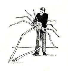 Japanese spider crab (Macrocheira kaempferi)