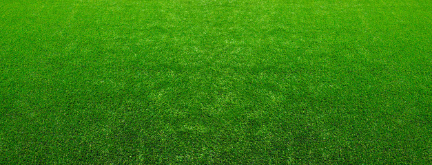 Texture green lawn