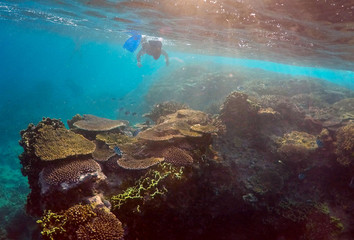 Senior Ranger in the Great Barrier Reef region for the Queenlsand Parks and Wildlife Service Oliver Lanyon takes photographs and notes during an inspection of the reef's condition in an area called the 'Coral Gardens' located at Lady Elliot Island