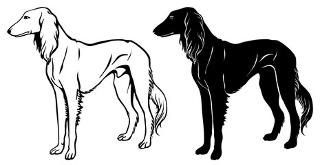 Saluki Hound set - outline and silhouette vector