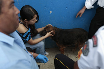 A woman touches a dog after it receives medical attention from paramedics next to a crime scene in Boca Del Monte, in the outskirts of Guatemala City