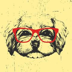 Portrait of Havanese with glasses. Hand drawn illustration of dog. T-shirt design. Vector