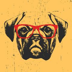 Illustration of Boxer dog with glasses