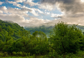 foggy mountain ridge over the forest in springtime