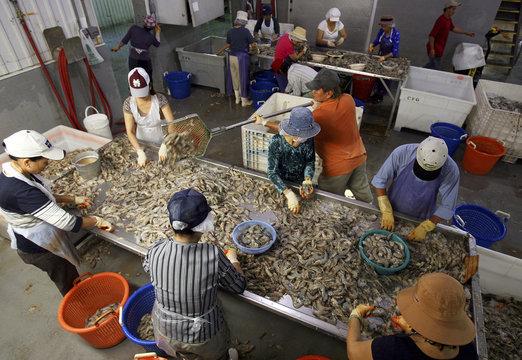 Employees dehead Louisiana white shrimp at C.F. Gollott & Son Seafood in D'Iberville