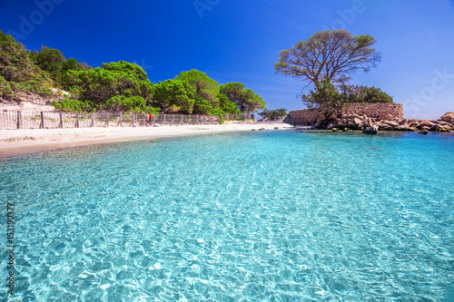 Famous Pine Tree On Palombaggia Beach Corsica France