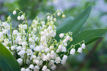 Tuinposter Lelietje van dalen lily of the valley flowers