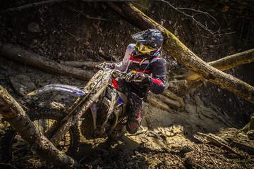 Poster Motorise A motocross rider passes under a fallen tree on a crosscountry race