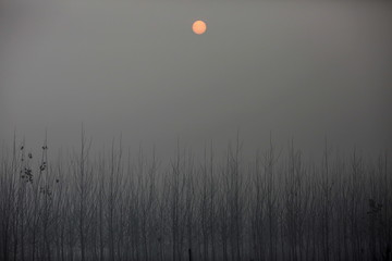 The sun is seen through the smog from a highway between Beijing and Hebei province, China, that is closed on an extremely polluted day