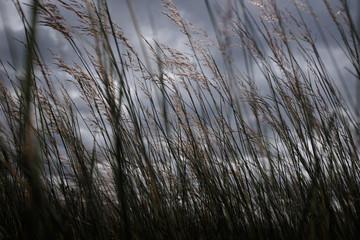 Tall-grass Prairie in Evening