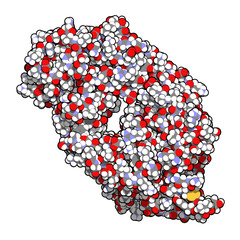 B-cell activating factor (BAFF, extracellular domain fragment) protein. Cytokine that acts as B cell activator. Target of the monoclonal antibody drug belimumab.