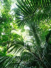 石垣島の森