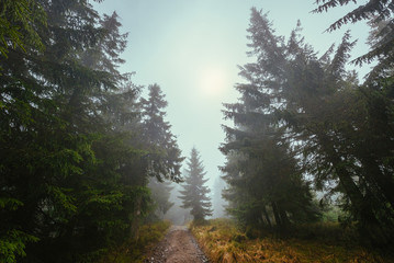 Path through a misty forest