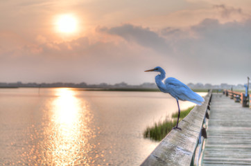 Egret Sunrise