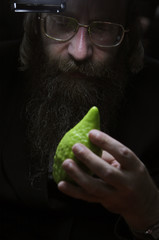 An ultra-Orthodox Jewish man checks an etrog, a citrus fruit in Jerusalem, ahead of Sukkot