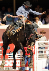 Sundell rides the horse Mata Fact to a first place finish in the Saddle Bronc event on the final day of the rodeo at the Calgary Stampede