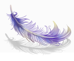 Feather Fashion. Concept Illustration, Abstract Clip Art.