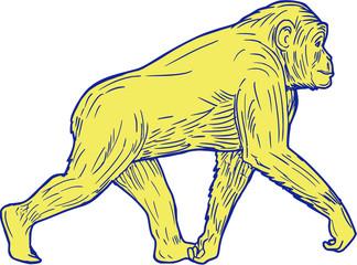 Chimpanzee Walking Side Drawing