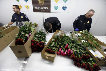 U.S. Customs and Border Protection Agriculture Inspection officers look for pests in boxes of roses at Miami International Airport in Miami