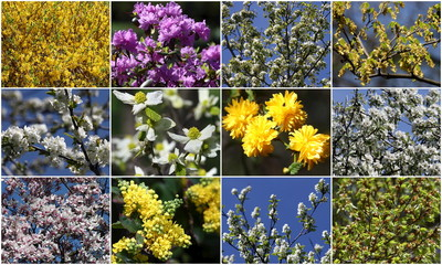 A combination photo shows blossoming bushes and trees in the Botanical Garden of the University of Vienna