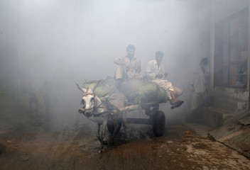 Men ride a donkey cart through vapour after the area was fumigated in the outskirts of Lahore