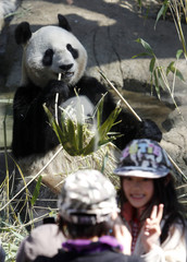 Visitors pose for pictures with female giant panda Xiannu, named Shin Shin in Japan, eating bamboo in the background at Ueno Zoological Park in Tokyo