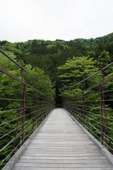 新緑の森の吊り橋