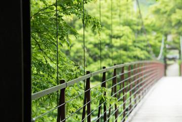 新緑の吊り橋 suspension bridge