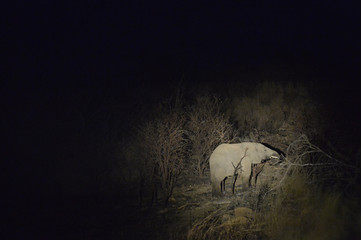 An elephant feeds at night time near Pretoria, in South Africa