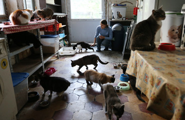 Laura Vecchio feeds some of the 25 abandoned cats that she rescued from the streets of her neighbourhood, in her apartment in Brussels