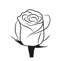 vector image roses on a white background